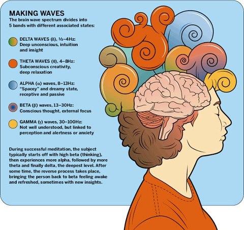 Las ondas cerebrales y los diferentes estados de conciencia